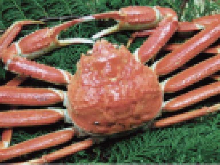カニ殻などの甲殻類の外皮